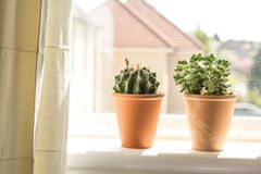 Beautiful, trendy succulents plant in the pot on the sill window. Close up shot Royalty Free Stock Image