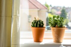 Beautiful, trendy succulents on the window sill, close up shot. Beautiful, trendy green succulents on the window sill, close up shot Stock Photos