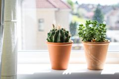 Beautiful, trendy succulents on the window sill, Stock Photography