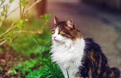 Beautiful tricolor cat on the sun Stock Photography