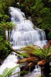 Beautiful Triplet falls. In Australian Forest Stock Photo