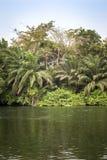 Beautiful tropic scenics Stock Photo