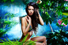 Beautiful tropic stock image
