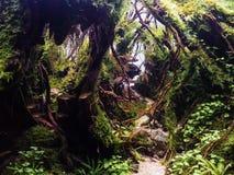 Free Beautiful Tropical Aqua Scape, Nature Aquarium Green Plant An Tr Royalty Free Stock Image - 120204446