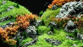 Free Beautiful Tropical Aqua Scape, Nature Aquarium Green Plant An Tr Stock Photography - 130989462