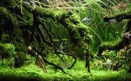 Free Beautiful Tropical Aqua Scape, Nature Aquarium Green Plant And Tropical Colorful Fish In Aquarium Fish Tank Royalty Free Stock Photo - 138090565