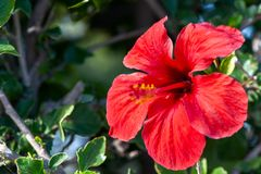 Beautiful tropical background with bright red flower,. Tropics Stock Photos