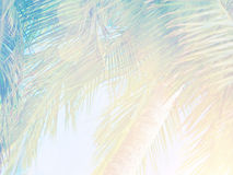 Beautiful tropical background Royalty Free Stock Photography