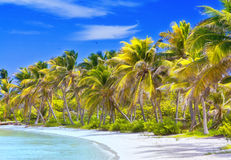 Beautiful tropical beach. With palm trees postcard Stock Photo