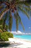 Beautiful tropical beach. With coconut palm tree Royalty Free Stock Images