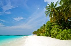 Beautiful tropical beach. With palm trees on the maldives Royalty Free Stock Photo
