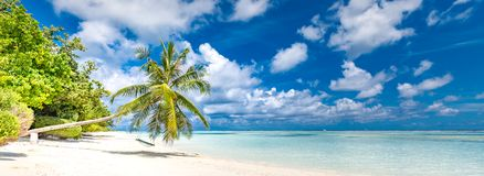 Beautiful tropical beach banner. White sand, coco palms travel tourism wide panorama background concept. Amazing beach landscape stock photography
