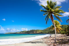 Beautiful tropical  beach in Baracoa, Cuba. Beautiful tropical  beach in Baracoa, Guantanamo province, Cuba Stock Images