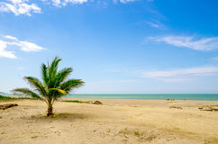 Beautiful tropical beach in the coast of ecuador Royalty Free Stock Photo