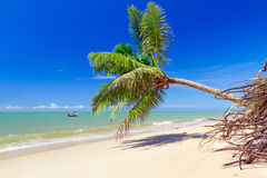 Beautiful tropical beach with coconut palm tree Royalty Free Stock Photography