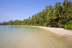 Beautiful tropical beach, coconut palm tree and clean sea water in Thailand Stock Photography