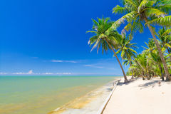 Beautiful tropical beach with coconut palm trees Stock Images