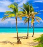 Beautiful tropical beach in Cuba Royalty Free Stock Images