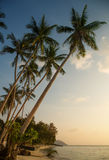 Beautiful tropical beach in the evening Royalty Free Stock Photos
