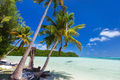 Beautiful tropical beach at exotic island in Pacific Royalty Free Stock Photo