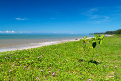 Beautiful tropical beach on Koh kho khao island Stock Photos