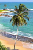 Beautiful tropical beach landscape with palm Royalty Free Stock Images