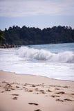 Beautiful tropical beach with lush vegetation Royalty Free Stock Photo