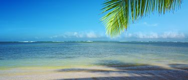 Palm tree branch and tropical beach on Caribbean sea as background. Beautiful tropical beach with palm tree branch and white sand Stock Image