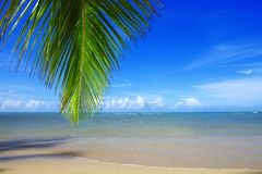 Palm tree branch and tropical beach on Caribbean sea as background. Beautiful tropical beach with palm tree branch and white sand Royalty Free Stock Photo