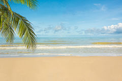 Beautiful tropical beach with palm tree and sand.  Royalty Free Stock Image