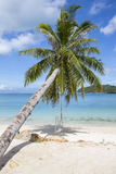 Beautiful tropical beach, palm tree and sea water in island Koh Phangan , Thailand Royalty Free Stock Image