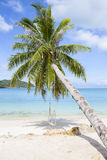 Beautiful tropical beach, palm tree and sea water in island Koh Phangan , Thailand Royalty Free Stock Photography