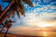 Beautiful tropical beach with palm tree. Seascape of beautiful tropical beach with palm tree at sunrise. sea view beach in summer background Stock Photos