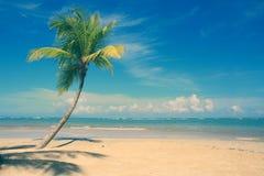 Palm tree on white tropical beach. Travel background. stock photo