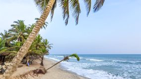 Beautiful tropical beach with palm trees. Beautiful tropical beach in Africa stock video footage