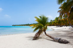 Beautiful tropical beach with palm trees in the afternoon Stock Photo
