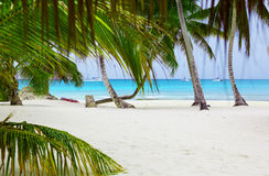 Beautiful tropical beach with palm trees in the afternoon Royalty Free Stock Photos