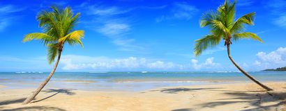 Palm trees and tropical beach on Caribbean sea as background. stock images