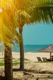 Beautiful tropical beach with palm trees. Color Toned Stock Photography