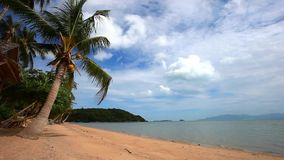 Beautiful tropical beach with palm trees in Koh. Samui. Thailand stock video