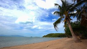 Beautiful tropical beach with palm trees in Koh. Samui. Thailand stock video footage