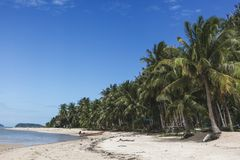 Beautiful tropical beach with palm trees. On sunny day royalty free stock images