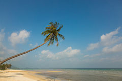 Beautiful tropical beach with palm trees. Turquoise water and white sand Stock Photography