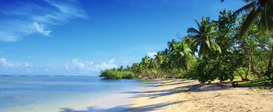 Palm trees on white tropical beach. Travel background. royalty free stock photos
