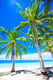Beautiful tropical beach with palm trees, white sand, turquoise ocean water and blue sky Royalty Free Stock Photos