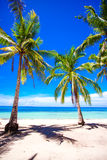 Beautiful tropical beach with palm trees, white sand, turquoise ocean water and blue sky Royalty Free Stock Images