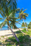 Beautiful tropical beach with palm trees Stock Photos