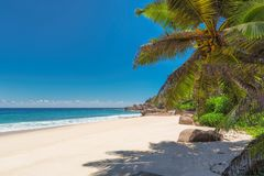 Beautiful tropical beach with palms royalty free stock photo