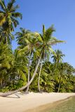 Tropical beach and sea with coconut palm tree on blue sky in Thailand Royalty Free Stock Photos