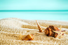 Beautiful tropical beach with seashells. Lying on the golden sand against a backdrop of a tranquil blue ocean and sunny summer sky Stock Image